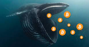 Over 150k Bitcoins Accumulated by Bitcoin Whales in 60 Days - CoinCentral